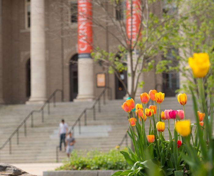 Photo: campus scenes spring tulips