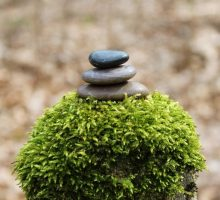 Photo: 3 rocks on top of a small shrub